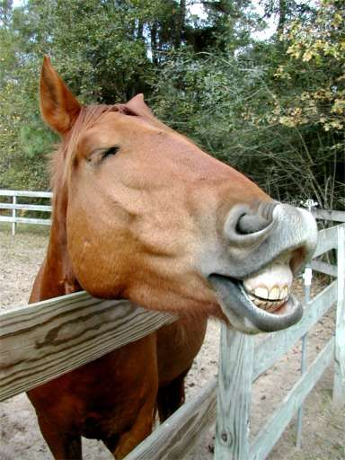Something for a Horse to Smile about ~ photo by Terry Fitch of Wild Horse Freedom Federation