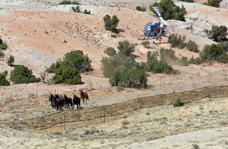 BLM Awards $740,000.00 U.S. Tax Dollars to Wild Horse Stampede Contractor