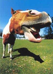 "Where is the ""Horse Sense"", here?!?!?"