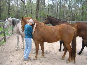 Compassion for our equine companions