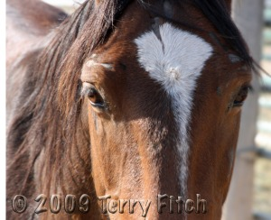 The face of those who suffer the cruelty of the predatory business of horse slaughter