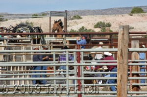 """Another horse tries to jump for freedom out of the """"processing"""" chute"""