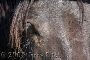 The future of our iconic wild horse looks dim