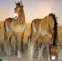 natural_history_prehistoric_horses_200