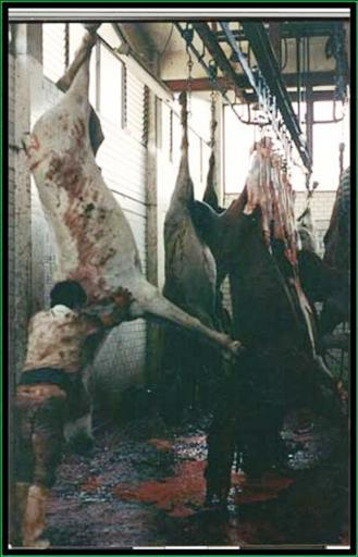 Horse slaughterhouses - photo#9