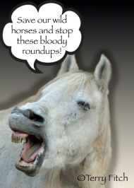 """Stop the bloody roundups, NOW!"""