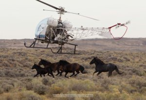 Photo by Carol Walker of Wild Horse Freedom Federation and Wild Hoof Beats