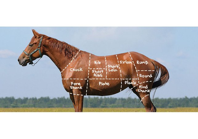 chart of horse meat cuts