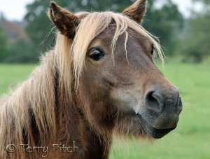 Ask President Obama to Support Protection for Horses