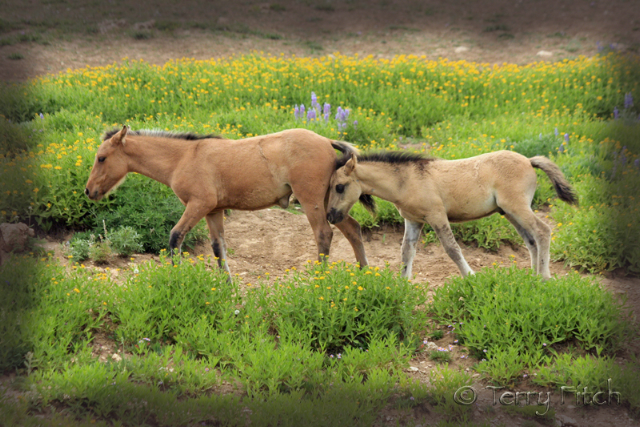 Federal Agency Votes To Slaughter 44,000 Of The 67,000 Wild Horses ...