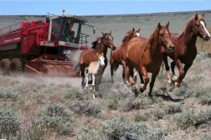 Obama Wild Horse Harvesting Machine ~ courtesy of John Holland