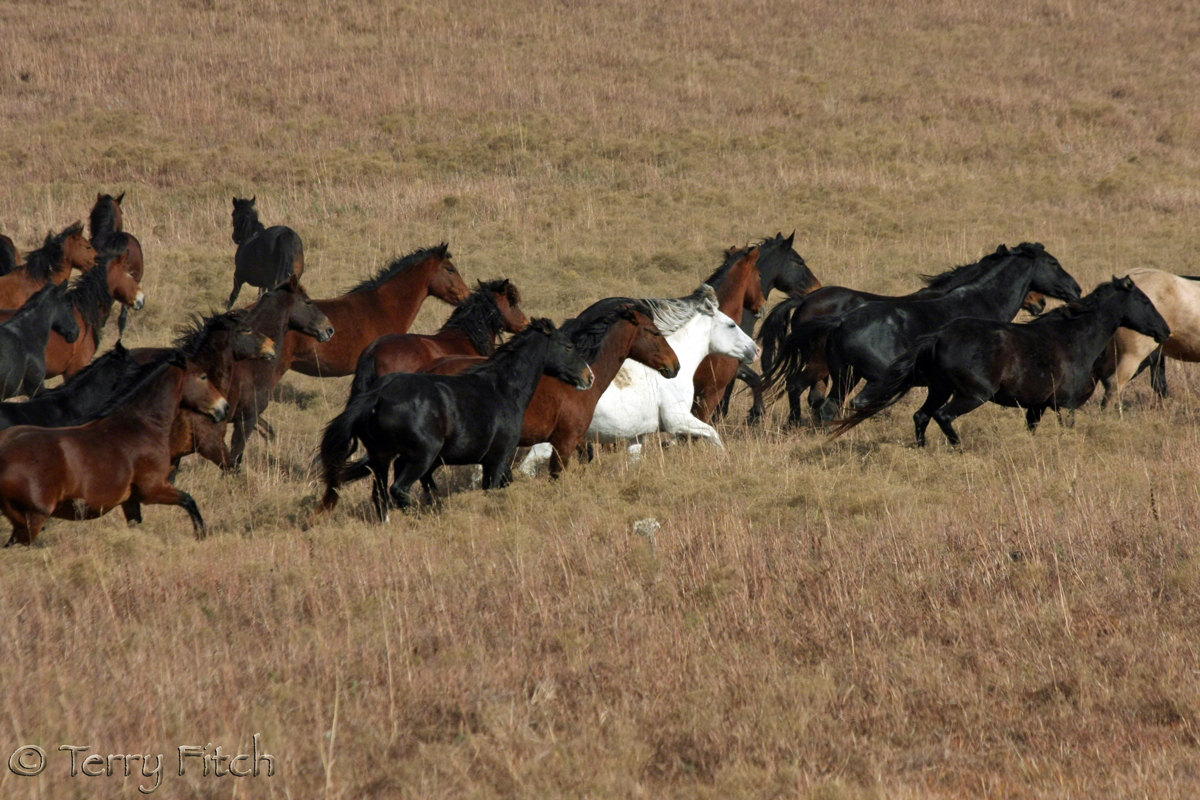 Blm Offering Tour Of Private Long Term Wild Horse Holding
