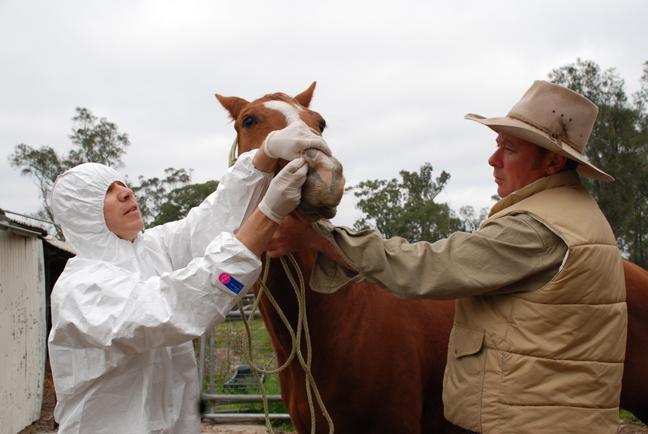 Equine Flu: Equine Herpes Virus Scare Spreads