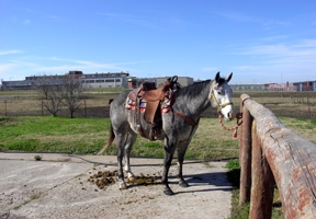 Update:Texas Prison Horses Found in Waco – Straight from the Horse's
