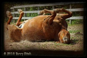 Our Pele doing his thing...photos by Terry Fitch of Wild Horse Freedom Federation