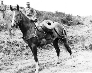 Sgt Reckless the real War Horse