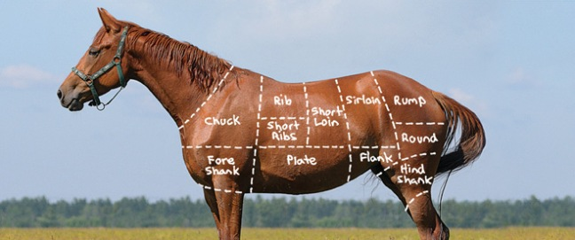 Radical Wyoming Politician S Horse Slaughter Plans Challenged In Missouri Straight From The Horse S Heart