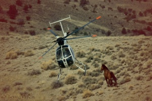 BLM's war on America's wild horses and burros at Antelope Valley, 2011 ~ photo by Terry Fitch of Wild Horse Freedom Federation