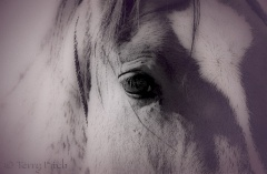 Eye to the Soul by Terry Fitch