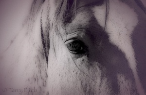 Eye to the Soul by Terry Fitch of Wild Horse Freedom Federation