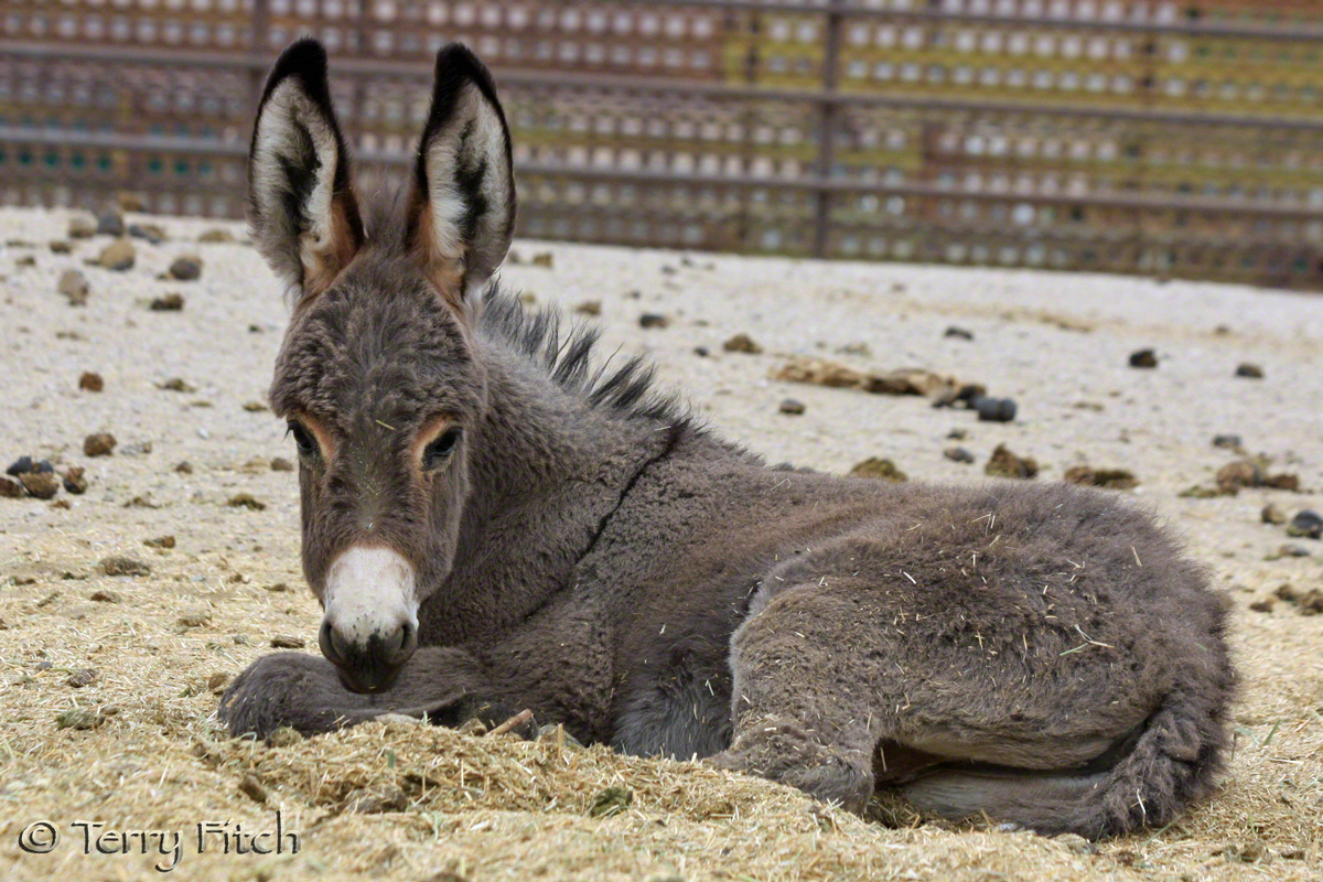 BLM Prisoner ~ by Terry Fitch of Wild Horse Freedom Federation