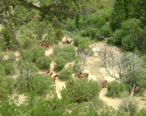 West Douglas Wild Horses