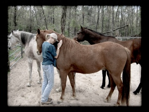 Equine photographer Terry Fitch of Wild Horse Freedom Federation with several members of the rescued Fitch herd ~ photo by R.T. Fitch