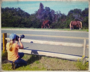 Terry Fitch of Wild Horse Freedom Federation photographing the Wild Horses of Assateague ~ photo by R.T. Fitch