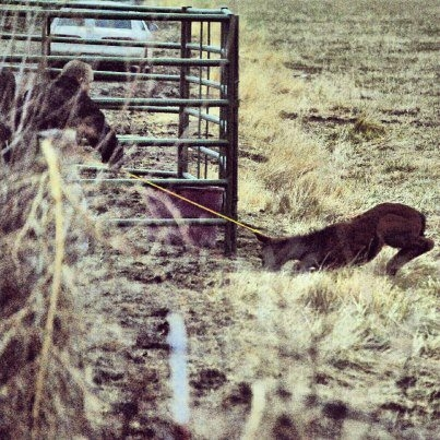 Reno Wild Horse Advocates outraged by Nevada Department of