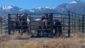 damonte-ranch-horses