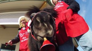 Nov. 17, 2012: In this photo Tinker, a miniature horse, rings a red bell for the Salvation Army outside a craft fair in West Bend, Wis. with his owners Carol and Joe Takacs. (AP)
