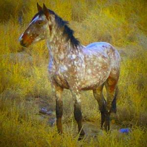 Virginia Range Horse