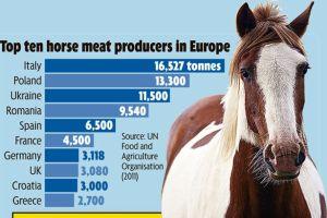 EU Horsemeat