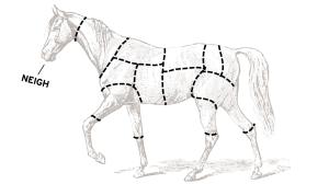 "American ""Quartered"" Horse"