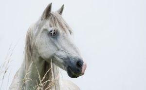 whitehorsehead-406