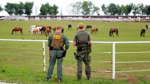zeta_cartel_horses_seized_sold_cbs_news