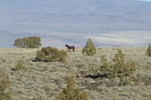 "This wild horse looking across the vista appears to be wondering the same thing that continually crossed our minds during this three day journey … ""Where have all the wild ones gone""?"