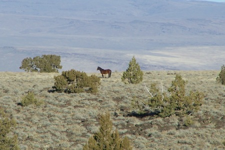 """This wild horse looking across the vista appears to be wondering the same thing that continually crossed our minds during this three day journey … """"Where have all the wild ones gone""""?"""