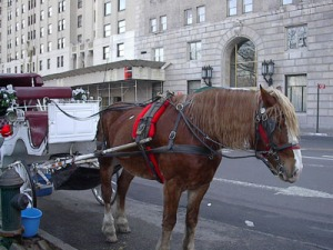 carriage_horse_new_york