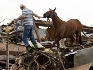 Tornado Horse