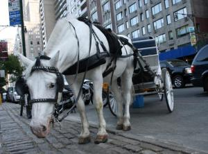 New York Carriage Horse - photographer unknown