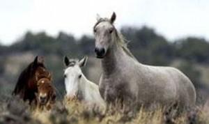 wildhorses-300x178