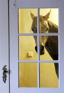 Nasar the horse likes it better at his owner's house (Picture: EPA)
