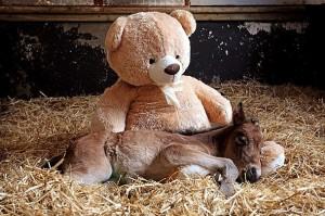 foal pic 3