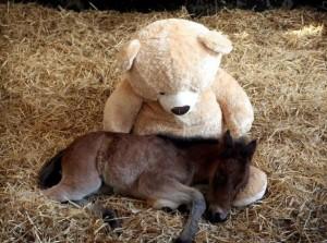 foal pic 4