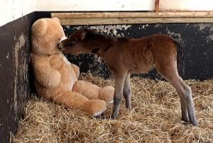 foal pic1