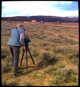 Ginger filming Cloud and Family, May 2014 ~ photo by R.T. Fitch of Wild Horse Freedom Federation