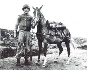 staff-sergeant-reckless-horse-bic-pic