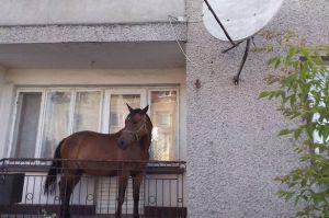PAY-Balcony-horse
