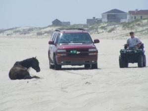 A wild horse on the beach near Corolla, N.C. (Sean Cockerham, McClatchy) SEAN COCKERHAM — McClatchy